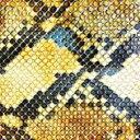 艺人名: A - Amazing Snakeheads / Amphetamine Ballads 輸入盤 【CD】
