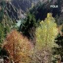 艺人名: P - Pole ポール / Wald 【CD】