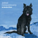 藝人名: A - Advance Base / Animal Companionship 輸入盤 【CD】