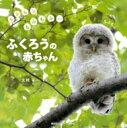 もふもふもふもふー ふくろうの赤ちゃん / 大橋弘一 【本】