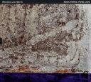 Artist Name: W - 【送料無料】 Wadada Leo Smith ワダダレオスミス / Rosa Parks: Pure Love 輸入盤 【CD】