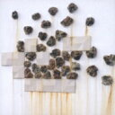 Artist Name: Q - 【送料無料】 Quaker Parents / Our Drawing Club 【CD】