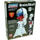 リンドバーグ 脳&左頭蓋骨