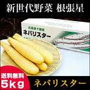 送料無料 北海道産 新世代野菜 ネバリスター(5kg)【なが...