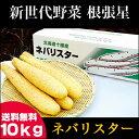 送料無料 北海道産 新世代野菜 ネバリスター(10kg)【な...