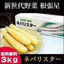今季出荷開始中!送料無料 北海道産 新世代野菜 ネバリスター(3kg)【ながいも 長いも 長イモ 芋 自然薯 里芋 やまといも 大和芋 産地直送 自宅用 ギフト 贈り物 とろろいも】