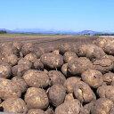 北海道芽室町尾藤農産 尾藤さんちのじゃがいも 北あかり5kg MLサイズ 1個約50g~250g 同梱不可 ギフト対応不可 産地直送