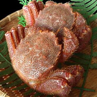 Boiled hairy crab around 360 g × 2 tail pieces