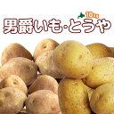 [2016秋収穫 じゃがいもセット] 北海道真狩産「男爵いも」「とうや」計10kg ジャガイモ 新じゃがいも 新じゃが 新ジャガ【楽ギフ_のし】【楽ギフ_のし宛書】