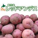 [2019年秋収穫 レッドアンデス 5kg] 北海道真狩産じゃがいも「レッドアンデス」ジャガイモ