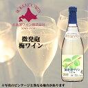 北海道ワイン おたるワイン 微発泡梅 500ml 北海道 お取り寄せ お土産 お酒