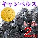 ぶどう キャンベルス 2kg 秀品 L〜2L 北海道 余市町...