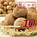 【北海道ニセコ産】新ジャガイモ「男爵」10kg LMサイズ正...