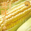 北海道産 とうもろこし恵味(めぐみ) L〜2Lサイズ 10本...
