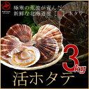 《送料無料》北海道小樽産 活ホタテ 3kg 殻付き(15?20枚)獲れたて新鮮! 活ほたて/活帆立/