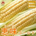 (送料無料)北海道当別「森本農園」とうもろこし 恵味ゴールド...