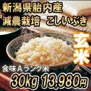 29年産 新米 新潟産こしいぶき 30kg 玄米 (10kg×3袋) 送料無料 食味Aランク (ほぼ 無農薬) 一等級