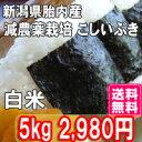 29年産 新米 新潟産こしいぶき 5kg 白米 送料無料 食味Aランク (ほぼ 無農薬) 一等級 新米