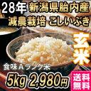 28年産 新潟産こしいぶき 5kg 玄米 送料無料 食味Aランク (ほぼ 無農薬) 一等級 新米 コシヒカリ以上の美味しさ