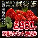 いちご 新潟産 2L?3Lサイズ イチゴ 苺 15個【460?500g】化粧箱入り 越後姫(えちごひ
