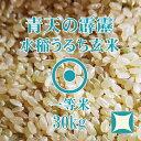令和元年産 青天の霹靂 玄米 30Kg 青森県産 せいてんのへきれき 一等米