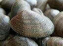 根室産天然特大あさり1kg入(レシピ付き)