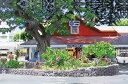 ハワイアン雑貨/インテリア/ハワイ 雑貨【栗山義勝】キャンバス パネル絵(ABCストア2) ハワイアン 雑貨ハワイアン 雑貨 ハワイ お土産 ギフト 【HLS_DU】【あす楽対応】【ポイント10倍】10P03Sep16