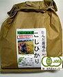 【送料無料】お試し版・初回限定・28年産・JAS認定・有機若緑小粒玄米・1.5kg