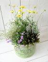 ☆送料無料☆GF2433ソレイユカップサークル(Sサイズ)グリーン☆お花の寄せ植え(肥料付)☆贈り物に♪