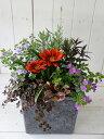 ☆送料無料☆JCH-201-GYミュルスクエア グレー☆お花の寄せ植え(肥料付)☆贈り物に♪