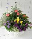 【GF1040-R】☆送料無料☆GF1040ローゼリーボウルM(ホワイト)のバラ苗入り寄せ植え(肥料付)☆贈り物に♪