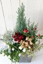 【JCH-201GY-CK】☆送料無料☆JCH201GYコニファーの寄せ植え(肥料付)☆お歳暮&クリスマスに♪