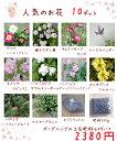 送料無料!【当店農場生産】人気のお花(宿根草)10