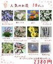 送料無料!【当店農場生産】人気のお花(宿根草)10鉢+ガーデ...