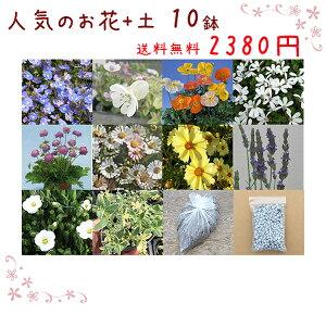 送料無料!【当店農場生産】人気のお花(宿根草)10鉢