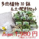 ☆☆【当店農場生産】とってもかわいい多肉植物&セダムの苗10鉢+多肉植物&セダム用の土15L+肥料のお試しセット☆