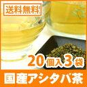 Ashitaba-s-20px3