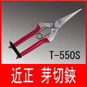 近正 ステンレス 芽切鋏 T-550S (芽切りはさみ 芽切り鋏)