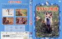 キタキツネ物語 中古DVD【中古】