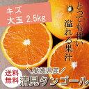 【送料無料】【ノーワックス・防腐剤不使用】愛媛県産【清見タンゴール】オレンジ み