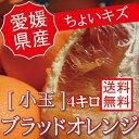 愛媛県産【国産ブラッドオレンジ【小玉4キロ】【ちょいキズ】【送料無料】冷蔵発送