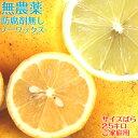 ポイント5倍【愛媛県大三島産】冷蔵発送 無農薬レモン【サイズ...
