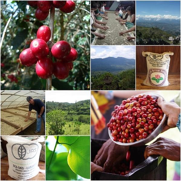 ◆無農薬栽培コーヒーブレンド 100g 無農薬...の紹介画像3