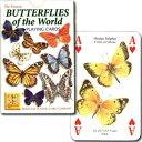 【人々を魅了してきた美しい蝶】バタフライ・オブ・ザ・ワールド