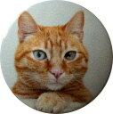 樂天商城 - グレイス GRACE GRACE スタートボタンカバー ・猫・ えっ!貼るだけ?かんたん取付 プッシュ スタート スイッチ カバー Push Start Switch Accessory for HONDA・猫・ グレイス GRACE GRACE車用 HONDA