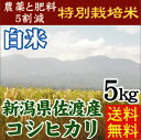 29年産 特別栽培米 送料無料 新潟県佐渡産コシヒカリ 5kg