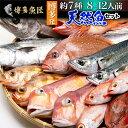 ショッピングお取り寄せグルメ 天然魚セット(竹)鮮魚 詰め合わせ 福岡 九州 鮮魚 刺身 約7種類 8〜12人前 海産物 海鮮 お取り寄せグルメ