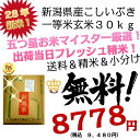 28年 新米 新潟県産 こしいぶき 玄米 30kg 一等米【米30kg 送料無料】