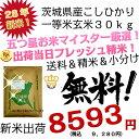 【 米30kg 送料無料 】 茨城県産 こしひかり 玄米 30kg 30キロ 28年 新米 一等米 精米無料