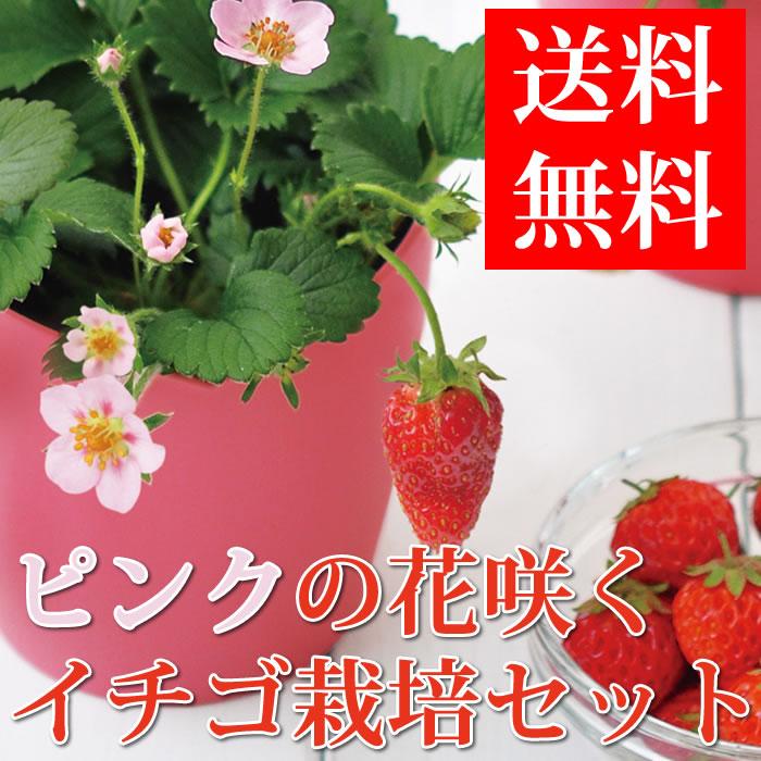 いちご栽培セット栽培キットストロベリー種発芽保証付ガーデニング観葉植物キッチンインテリア母の日誕生日